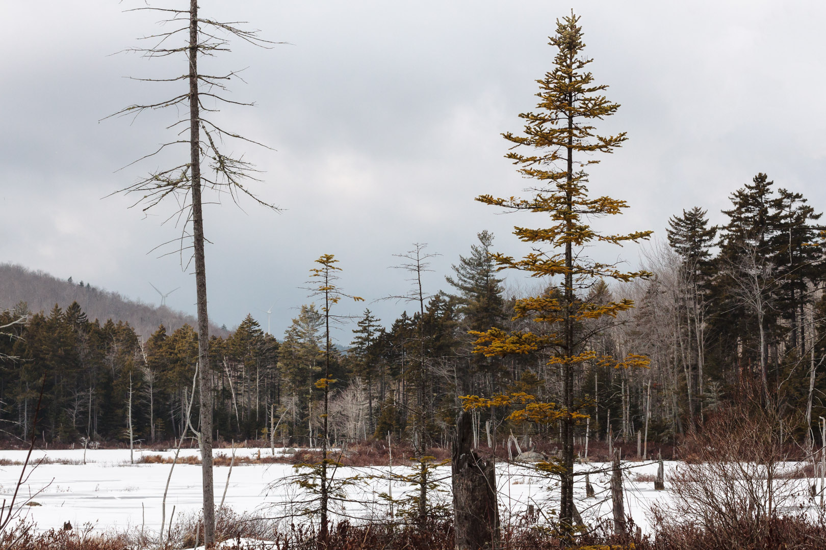 Pillsbury State Park NH | Christina Minniti Photography